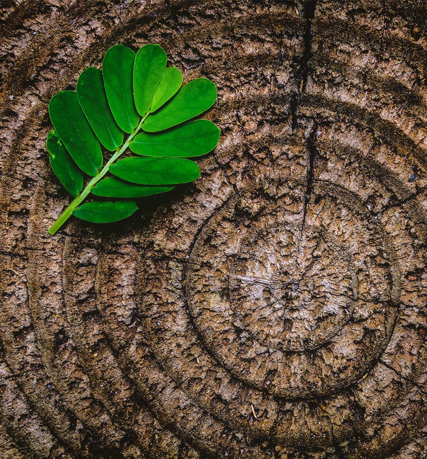 Pranayama Atem Blatt Holz